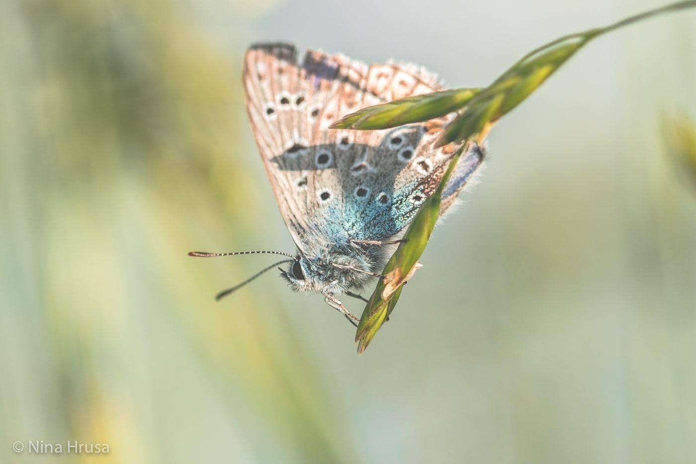 Schmetterling - Freiheit in Zeiten der Corona-Krise
